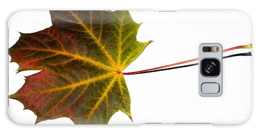 Maple Galaxy S8 Case featuring the photograph Autumn Maple Leaf by Frank Gaertner