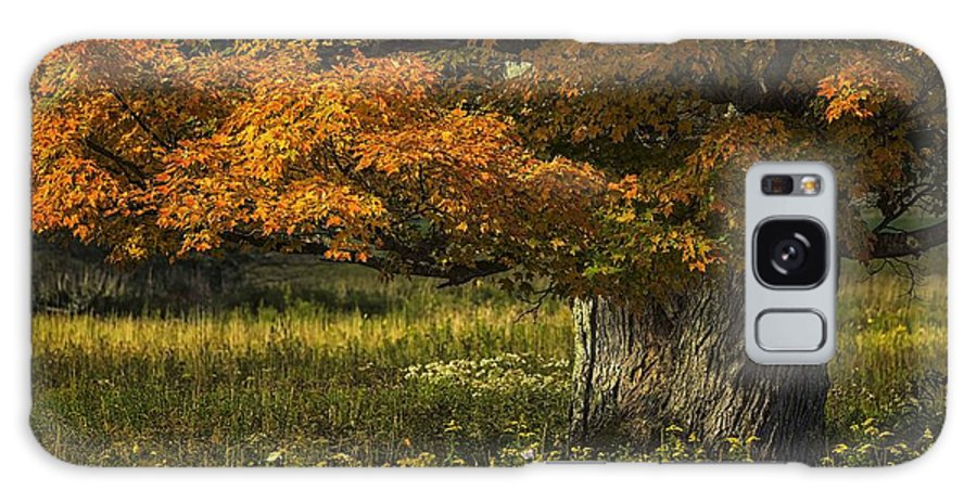 Maple Tree Galaxy S8 Case featuring the photograph Autumn Maple by Tom Fretz