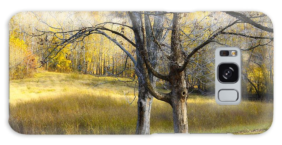 Tree Galaxy S8 Case featuring the photograph Autumn Trees by Eric Wheeler