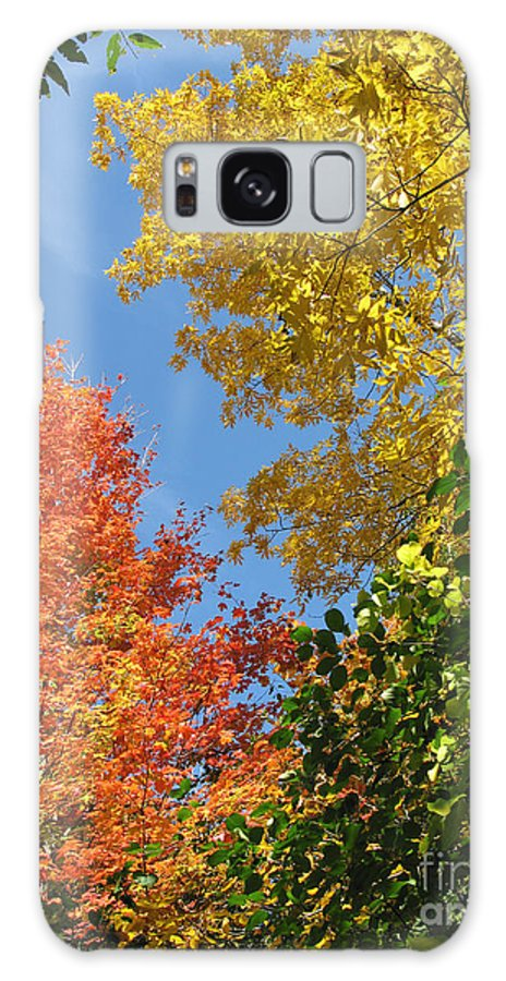 Autumn Galaxy S8 Case featuring the photograph Autumn Treetops by Ann Horn