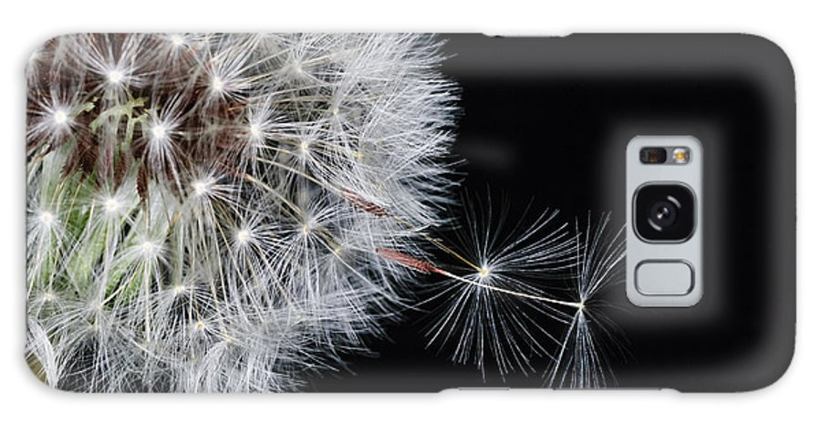 Dandelion Galaxy S8 Case featuring the photograph Away We Go by Dennis Reagan
