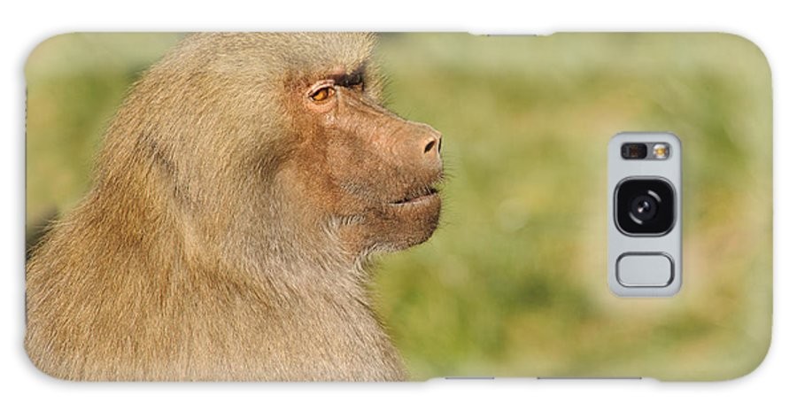 African Galaxy S8 Case featuring the photograph Baboon by Jeffrey Banke