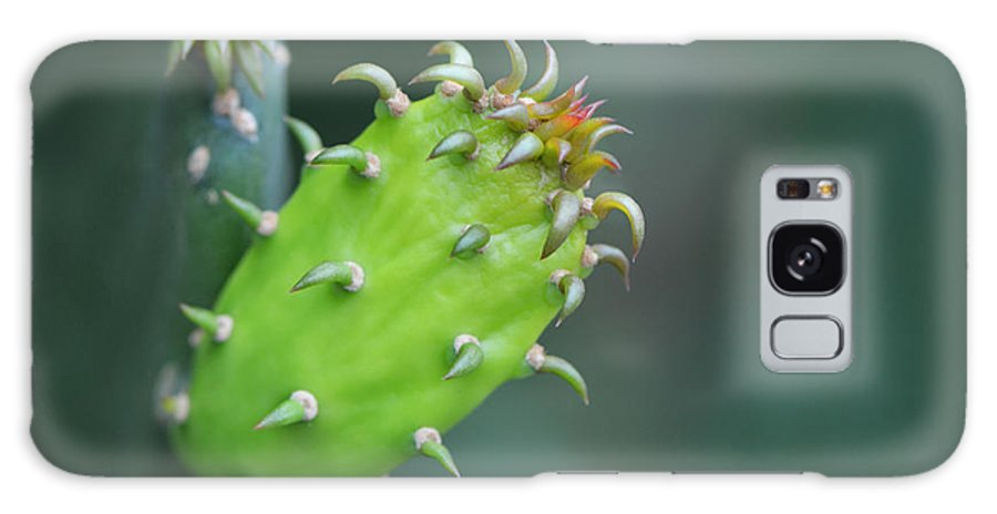 Macro Photography Galaxy S8 Case featuring the photograph Baby Cactus - Macro Photography By Sharon Cummings by Sharon Cummings