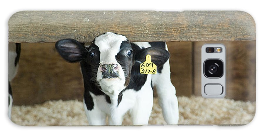 Cow Galaxy S8 Case featuring the photograph Baby Cow by Louise Magno
