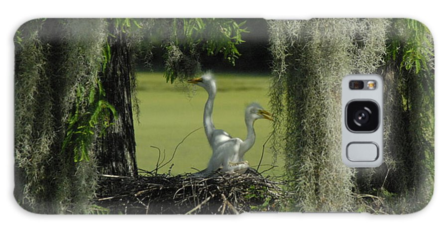 Baby Egrets Awaiting For Mom's Return. Galaxy S8 Case featuring the photograph Baby Egrets by Cheryl Kostanesky