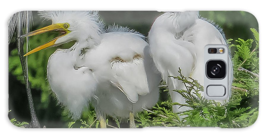 Florida Galaxy S8 Case featuring the photograph Baby Egrets by Jane Luxton