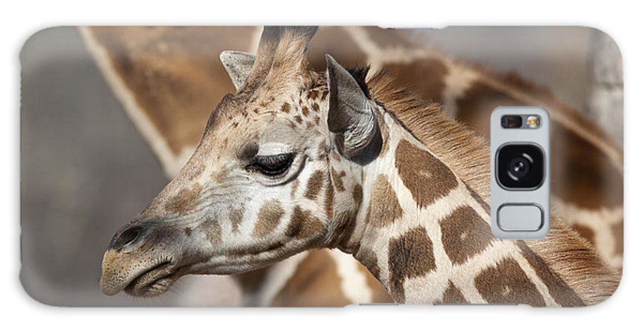 Giraffe Galaxy S8 Case featuring the photograph Baby Giraffe And Mother by Brandon Alms
