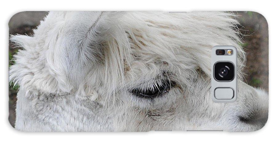 Baby Llama Galaxy S8 Case featuring the photograph Baby Llama by Ellen Henneke