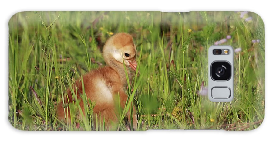 Sandhill Chick Galaxy S8 Case featuring the photograph Baby Sandhill Crane Chick by Deborah Benoit