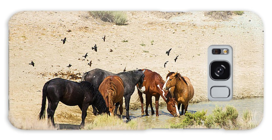 Wild Horses Galaxy S8 Case featuring the photograph Bachelor Stallions And Birds by Terri Cage