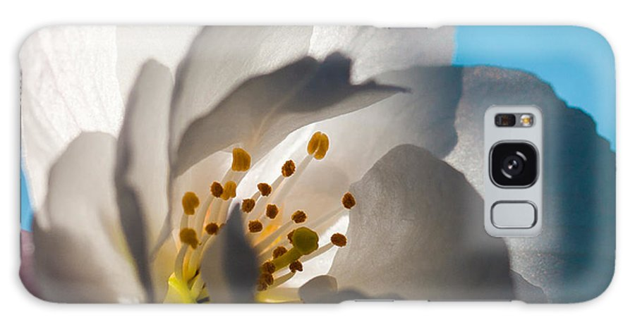 Blossom Galaxy S8 Case featuring the photograph Backlit Cherry Blossom by David Patterson
