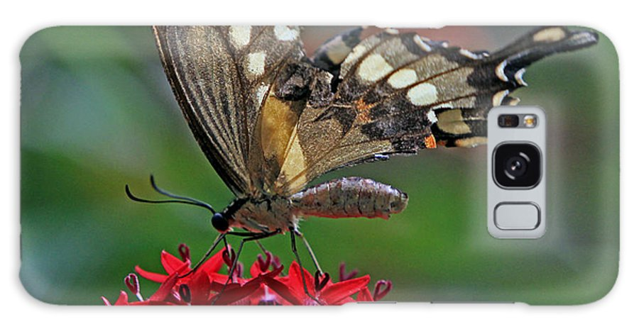 Butterfly Galaxy S8 Case featuring the photograph Backlit Swallowtail by Larry Nieland