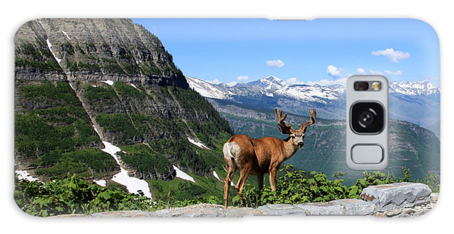 Deer Galaxy S8 Case featuring the photograph Backwards Glance by Aaron Aldrich