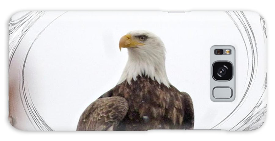 Bald Eagle Galaxy Case featuring the photograph Bald Eagle Adult by Rennae Christman