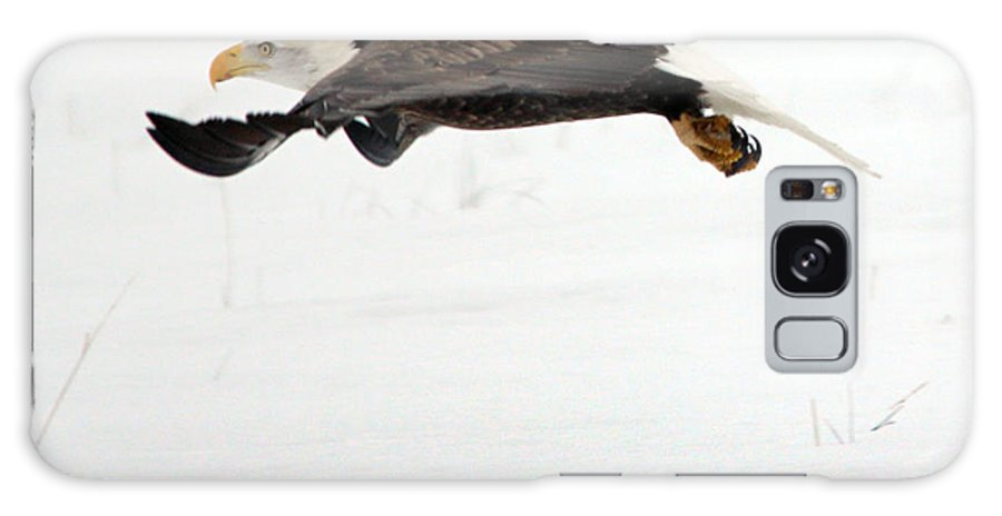 Bald Eagle In Flight Galaxy S8 Case featuring the photograph Bald Eagle by Brandon Ostermiller