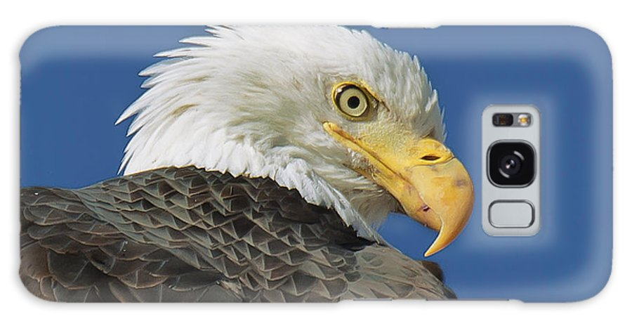 Eagle Galaxy S8 Case featuring the photograph Bald Eagle Closeup by Dianne Phelps