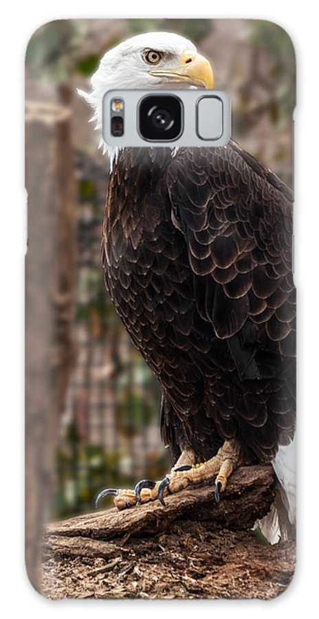 Eagle Galaxy S8 Case featuring the photograph Bald Eagle by Mark Papke