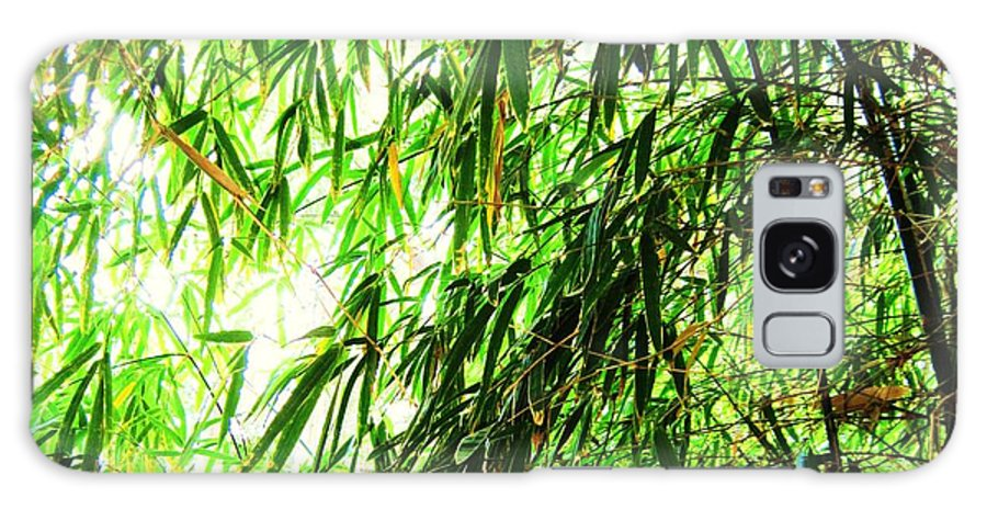 Bamboo Tree Galaxy S8 Case featuring the photograph Bamboo Tree by Esther Rowden
