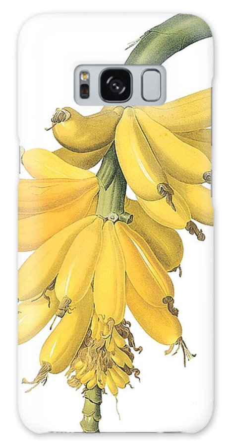 Fruit Galaxy S8 Case featuring the drawing Banana by Spencer McKain