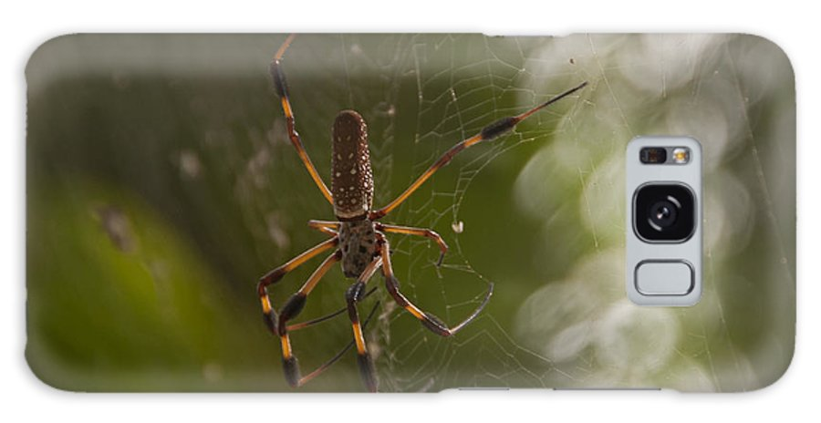 Sunrise Galaxy S8 Case featuring the photograph Banana Spider by Roy Thoman