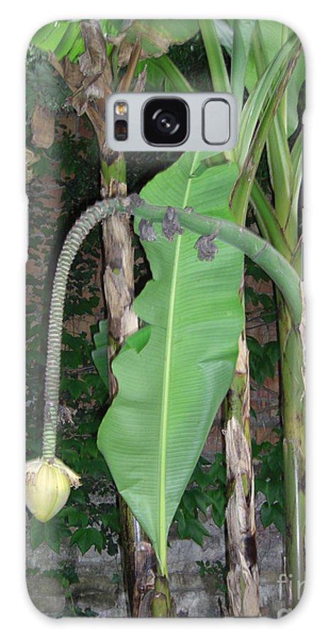 Ravenna Galaxy S8 Case featuring the photograph Banana Tree Flower Buds by Deborah Smolinske