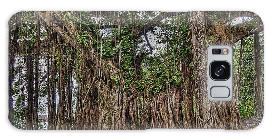 Tree Galaxy S8 Case featuring the photograph Banyan Tree At Folly by Vidal Smith Jr