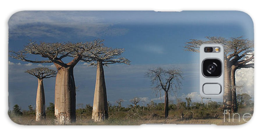 Nature Galaxy S8 Case featuring the photograph baobab parkway of Madagascar by Rudi Prott