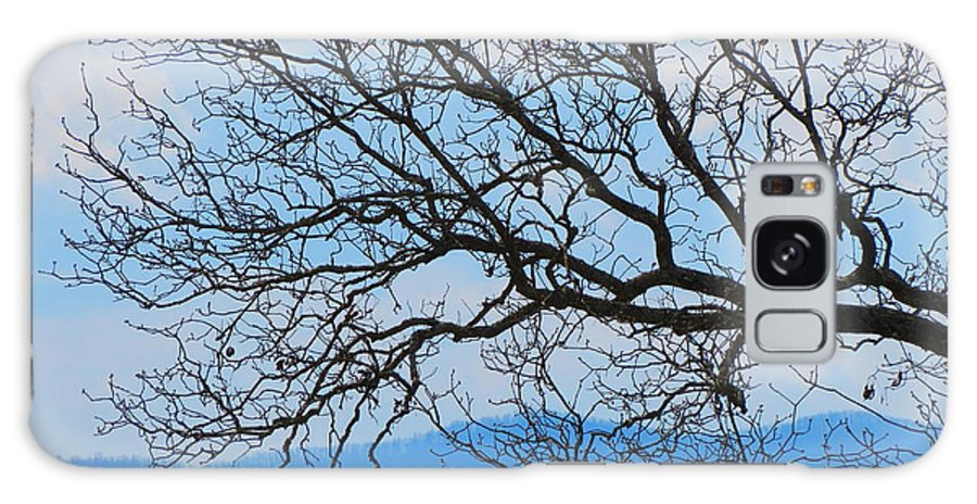 Tree Galaxy S8 Case featuring the photograph Bare Tree Against Blue Sky by Anita Adams