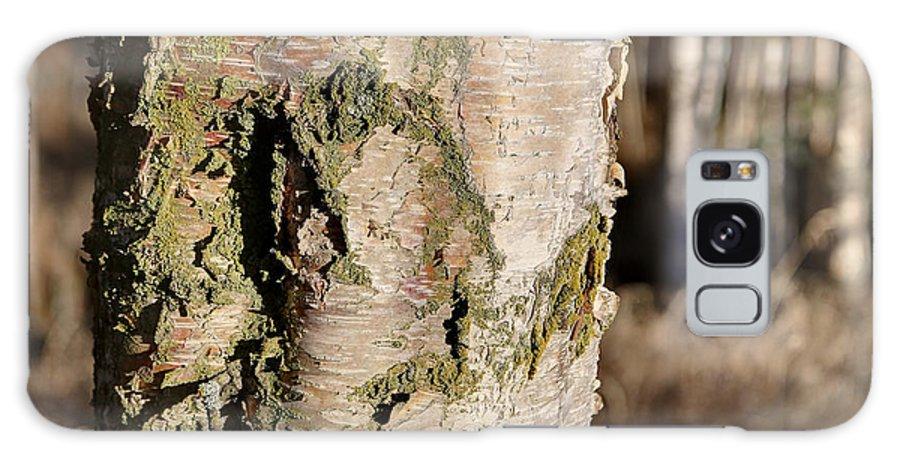 Bark Galaxy S8 Case featuring the photograph Bark1 by Robin Carter
