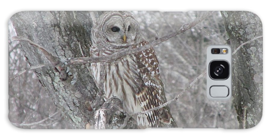 Barred Owl Galaxy Case featuring the photograph Barred Owl by Rick Huotari