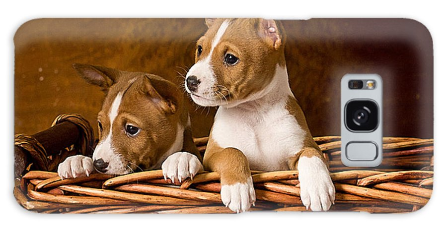 Basenji Puppies Galaxy S8 Case For Sale By Marvin Blaine