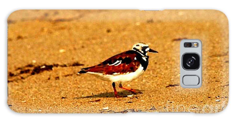 Shore Bird Galaxy S8 Case featuring the photograph Beach Bird 1 by Anita Lewis