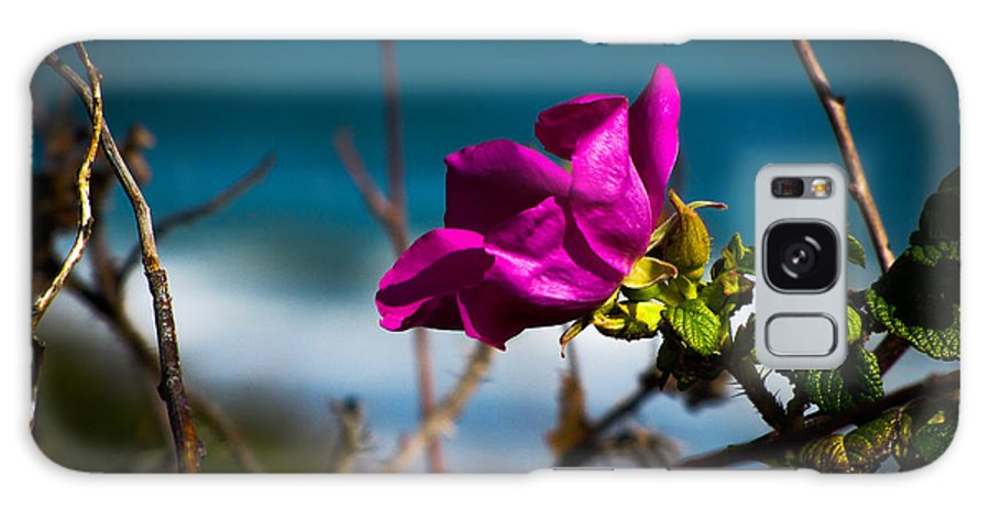 Flower Galaxy S8 Case featuring the photograph Beach Flower by Charlene Gauld