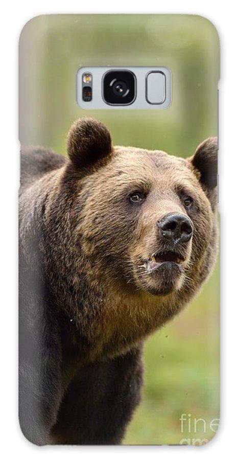 Brown Galaxy S8 Case featuring the photograph Bear Portrait by Erik Mandre