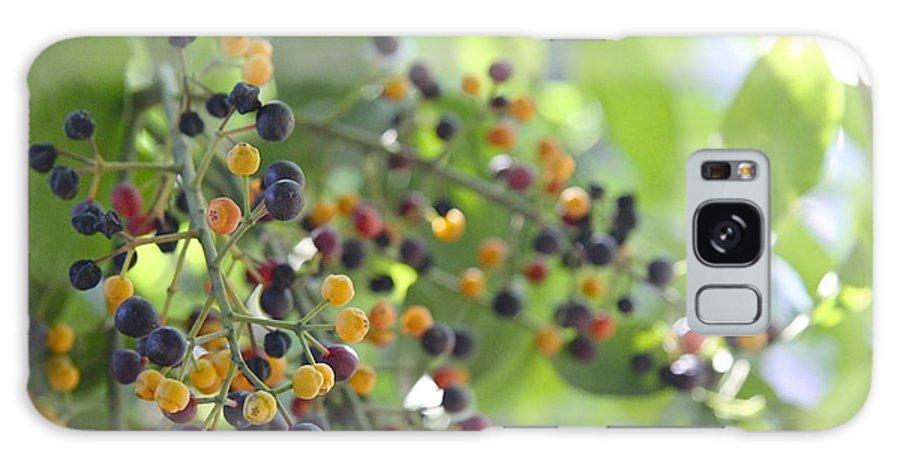 Berries Galaxy S8 Case featuring the photograph Bearing Good Fruit by Sean Rathbun