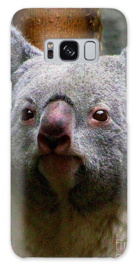 Koala Bear Bears Ohio Rlclough Zoo Zoos Galaxy S8 Case featuring the photograph Bears In Ohio. No.19 by RL Clough