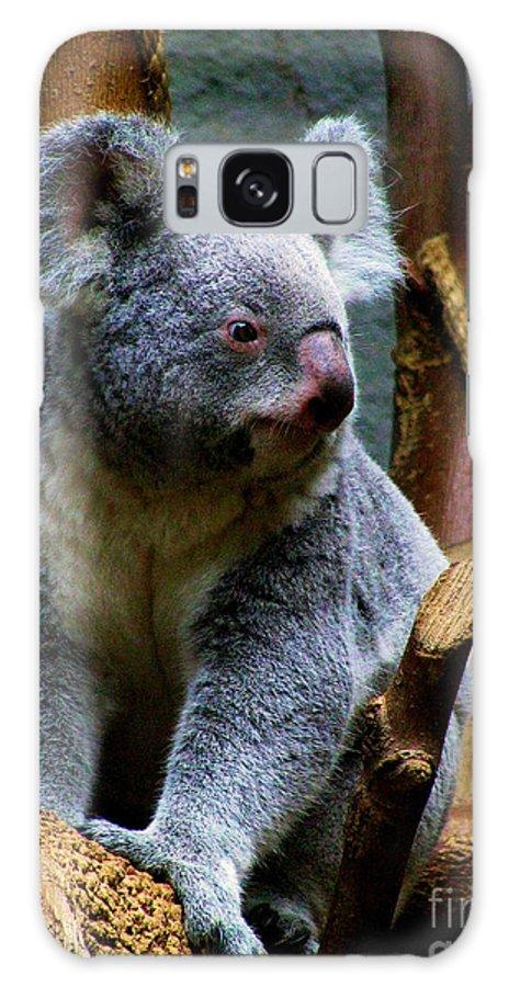 Koala Bear Bears Ohio Zoo Zoos Rlclough Galaxy S8 Case featuring the photograph Bears In Ohio. No.20 by RL Clough