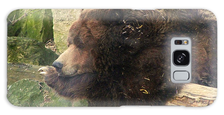 Bears Bear Brown Ohio Rlclough Zoo Zoos Galaxy S8 Case featuring the photograph Bears In Ohio. No.23 by RL Clough