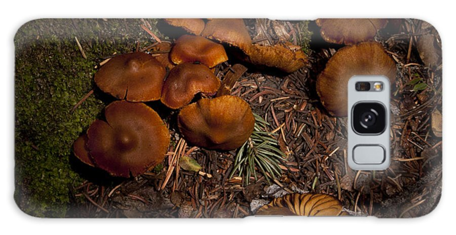 Beartooth Mountain Mushrooms Galaxy S8 Case featuring the photograph Beartooth Mountain Mushrooms  #3661 by J L Woody Wooden