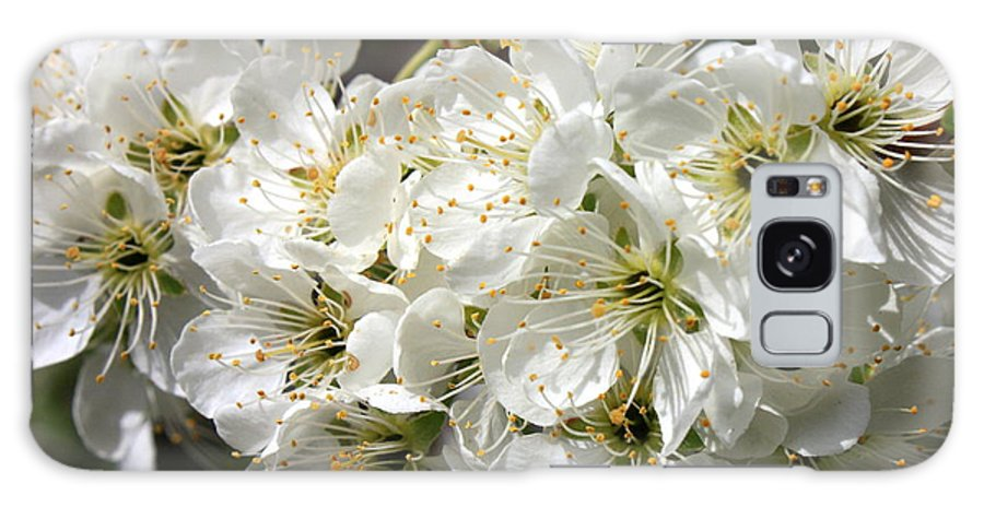 Apple Blossoms Galaxy S8 Case featuring the photograph Beautiful Apple Blossoms by Carol Groenen