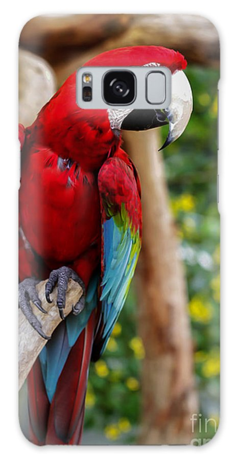 Animal Galaxy S8 Case featuring the photograph Beautiful Mccaw by Sabrina L Ryan