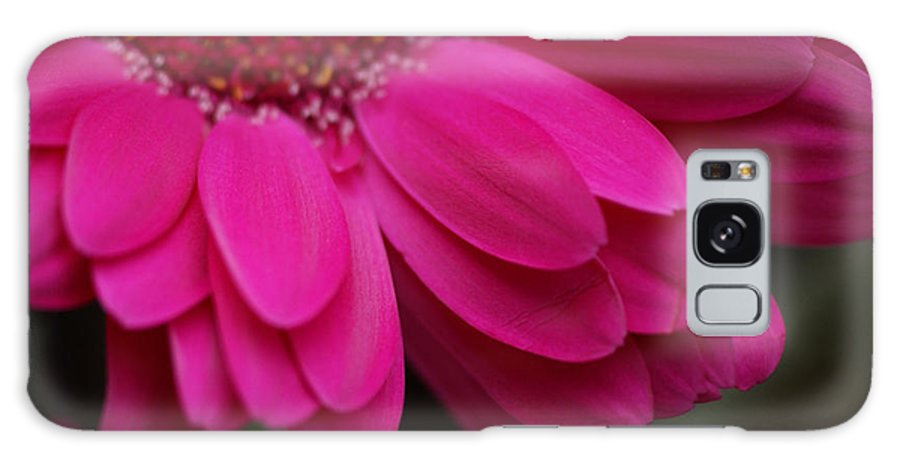 Pink Galaxy S8 Case featuring the photograph Beautiful Petals by Carol Lynch