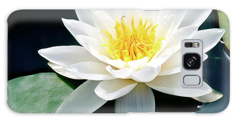 Water Lily Galaxy S8 Case featuring the photograph Beautiful Water Lily Capture by Ed Riche