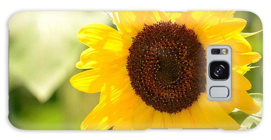 Beauty Beheld - Sunflower Galaxy S8 Case featuring the photograph Beauty Beheld - Sunflower by Maria Urso