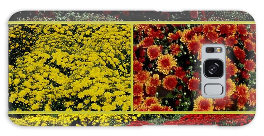 Fall Flower Galaxy S8 Case featuring the photograph Beauty Of The Fall Mums by Gail Matthews