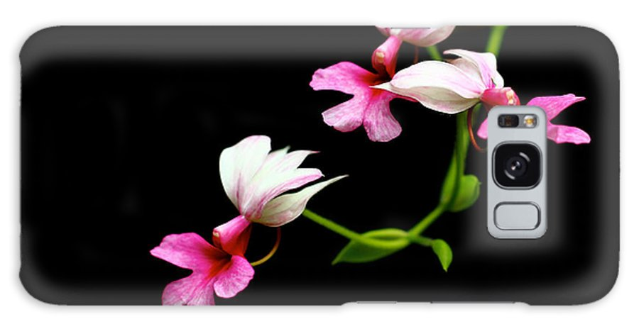 Flower Galaxy S8 Case featuring the photograph Beauty On Black by Lezanne Gibbs