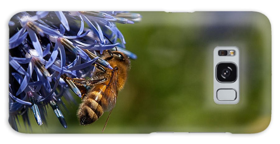 Summer Flower Photography Galaxy S8 Case featuring the photograph Bee At Work by Sabine Edrissi