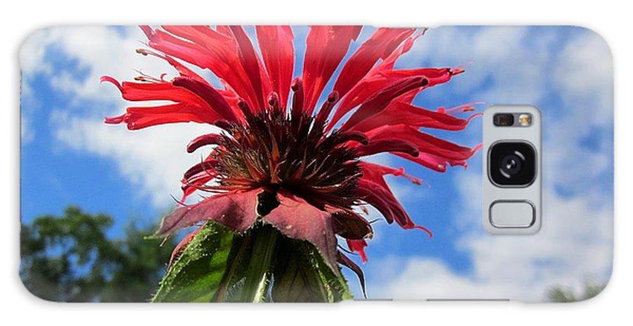 Monarda Galaxy S8 Case featuring the photograph Bee Balm Sky by MTBobbins Photography