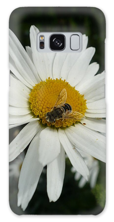 Bee Galaxy S8 Case featuring the photograph Bee Daisy by Nicki Bennett