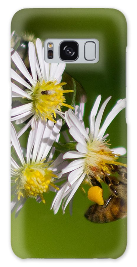 Insects Galaxy S8 Case featuring the photograph Bee Harvest by Frank Pietlock